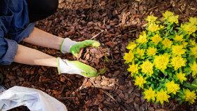 Mulčování šetří práci a pomáhá rostlinám. Víte ale, kdy, jak a co mulčovat?
