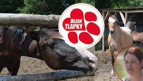 Po chovatelce podezřelé z týrání koní jde další úřad. Ohrady i přístřešky má načerno