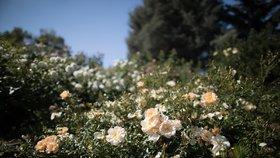 Provoněná Troja: Botanická zahrada láká na vůně exotických rostlin, koření i bylinek