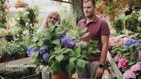 Hobby s Markétou Mayerovou: Jak na hortenzie, aby byly ozdobou zahrady?