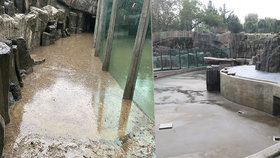 Divoká bouřka spláchla i lachtany v Zoo Praha! Přinesla balvany, bazén museli vyčistit