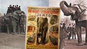 Tragický osud »největšího« slona světa Jumba: Přes den vozil děti, v noci trpěl krutými běsy!