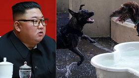 Kim šokoval novým zákonem: Severokorejci kvůli hladu musí odevzdat své psy restauracím