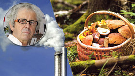 Jedovaté olovo a kadmium v houbách: Až desetkrát víc škodlivin, přiznává toxikolog!