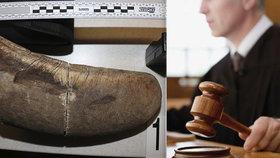Chtěli nelegálně prodat nosorožčí roh: Odsouzený policista s kumpány se proti rozsudku odvolali