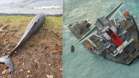 Palivo z rozlomené lodi ničí exotický ráj: U břehů Mauricia uhynulo už 17 delfínů