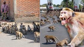 Turisté kvůli covidu zmizeli z thajského Lopburi: Město se změnilo v »planetu opic«!