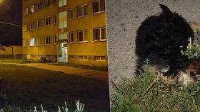 Lidská stvůra vyhodila z okna pětiměsíční štěňátko! Na místě zemřelo