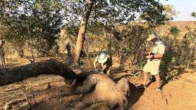 U národního parku našli desítky mrtvých slonů. Bude jich přibývat, bojí se správci