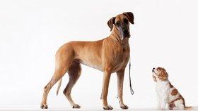 Jaká psí plemena se nejlépe hodí pro život v bytě?