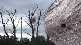 Stará vrbová alej začala chřadnout: Stromy možná někdo otrávil!