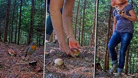 """Živý přenos z lesa: Krásné hříbky zmizely přímo před kamerou! Kdo nahradil veverku """"zlodějku""""?"""
