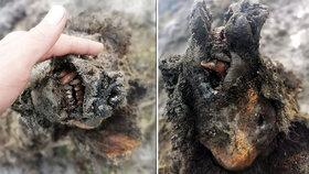 Na Sibiři našli zachovalého jeskynního medvěda: Vyhynul před 15 000 lety!