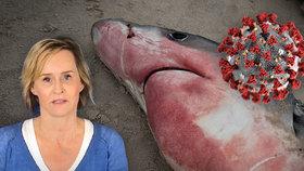 Problém vakcíny proti koronaviru: Půl milionu žraloků kvůli ní může zemřít, tvrdí experti