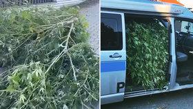 """Policisté """"vyčmuchali"""" covid-pozitivního pěstitele marihuany: Nezaměnitelný odér se táhl celou ulicí"""