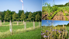 Praha dostala ocenění za šetrné zemědělství. Projekt Plužiny láká i místní