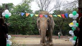 V izolaci a na řetězech. Nejosamělejší slon trpěl roky v zoo, lepší život bude mít i díky celebritám