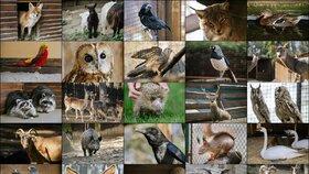 Opuštěná mláďátka veverek, ježci i ptáci: V záchranné stanici loni ošetřili přes 5 tisíc pacientů