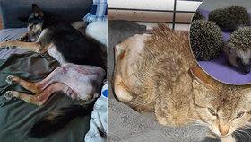 Vánoce opuštěných a zraněných zvířátek z Prahy: Potěšit je můžete krmením i adopcí na dálku