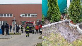 Holčičku (6) u Prahy uštkl jedovatý had: Matka popsala okamžiky hrůzy. Hada zatím nenašli