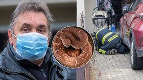 Holčičku (6) uštkl jedovatý had: Je z černého chovu?! Strach sousedů, co říkají odborníci?