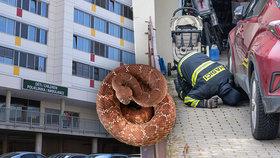 Uštknutí v Jenštejně: Policie už vyslechla zraněnou holčičku (6)! Existenci hada nikdo nepotvrdil