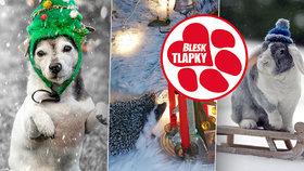 Vítězem vánoční soutěže je ježek Romeo. Blesk tlapky ocenily i fenku Bubu a králíka Majlíka