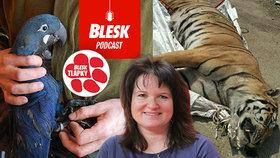 Blesk Podcast: Ženy si dávaly vejce do podprsenek, muži ještěrky do slipů, říká žena, která 27 let lovila pašeráky