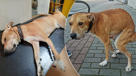 Nemocný pejsek se musel živit odpadky: Spolek zvíře zachránil a majitelce slibuje trestní oznámení