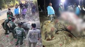 Pytláci do slona nastříleli 43 kulek: Ochránci se ho měsíc snažili zachránit, marně