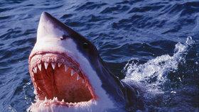 Turistu zachránil před žralokem tuleň
