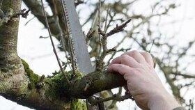 Zimní prořez stromů: Naučte se nejčastější techniky
