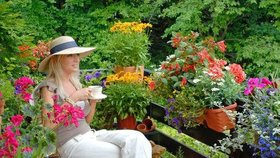 15 květin, které prozáří vaše okna a balkóny. Do stínu dejte fuchsie, na slunce muškáty