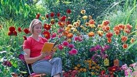 Letničky rozzáří zahradu: Jak se o ně správně starat?