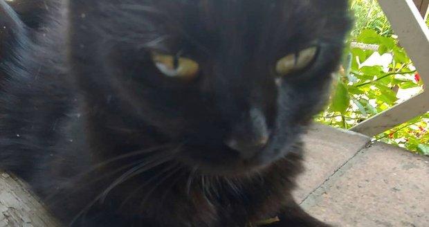 Kočička Lú, kterou Patrasové zajelo auto.