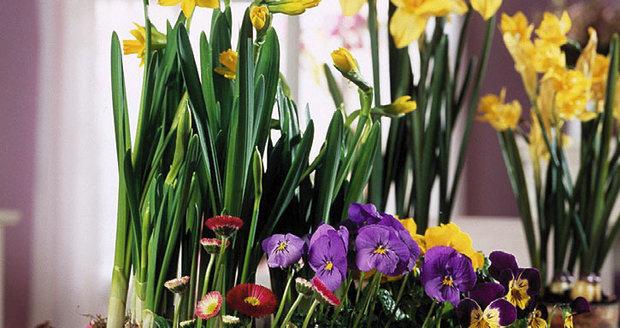 Jarní motivy se pro ubrouskovou techniku mimořádně hodí. Ozdobte jimi bedýnky, květináče, truhlíky, podnosy a nezapomeňte také na velikonoční vajíčka.
