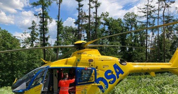 Na mladého muže spadl v lese u Rosic na Brněnsku při kácení strom. Záchranáři museli přistát mezi vysokými stromy.