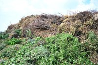 Rekord v pražské kompostárně: Za loňský rok zde skončilo přes tři tisíce tun bioodpadu