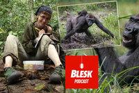 Podcast: Gorily může zabít i rýma. Nový koronavirus se ve volné přírodě u lidoopů zatím nešíří