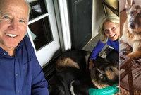 """Bidenovi psi se stěhují z Bílého domu kvůli """"bezpečnostnímu incidentu"""". Co se stalo?"""