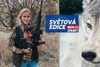 Vlci na odstřel: Trump povolil lov, za 60 hodin jich v celém státě vybili čtvrtinu