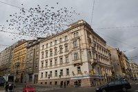 Co s přemnoženými holuby? Místo zplynování by mohl pomoci obecní holubník