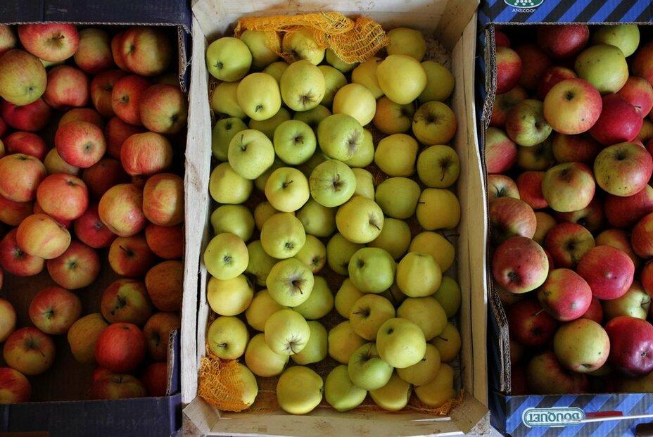 zemědělství, ovoce,  jablka