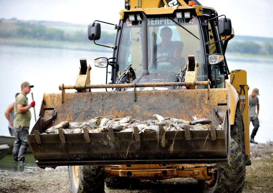 V rybníku Nesyt uhynulo až 100 tun ryb.