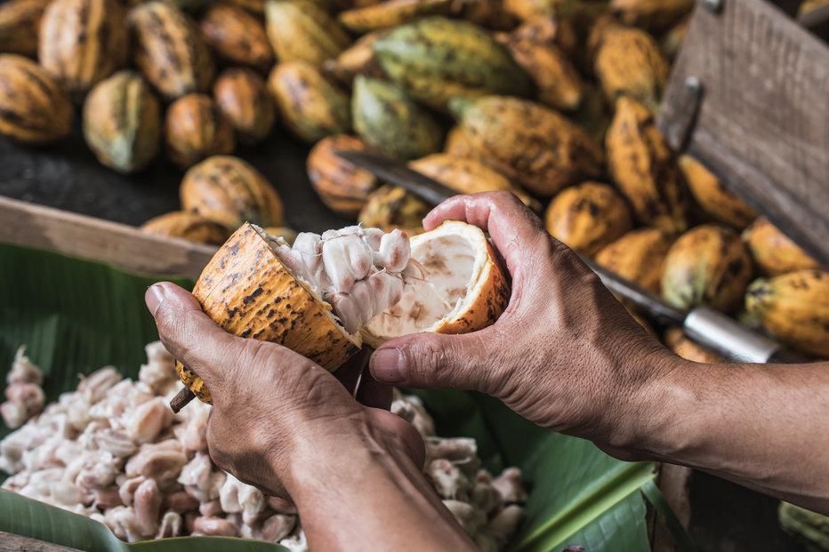 Kakaové boby, ilustrační foto.