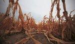 Nedostatek vody je pro Česko větší hrozbou než oxid uhličitý, varuje odborník