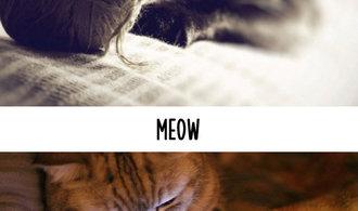 Kočky a moderní technologie: budete se divit, jak jim změnily život