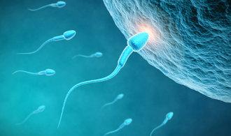 """Vědci zjistili, že spermie v pohybu """"klame tělem"""""""