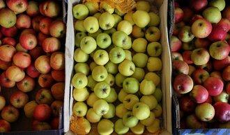 Jablek se sklidí o desítky tisíc tun víc, odhady ale byly ještě vyšší