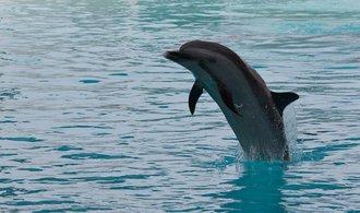 Místo delfínů budou v Praze aligátoři a mroži, organizátor se nevzdává